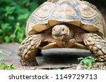 sulcata tortoise is herbivores. ...   Shutterstock . vector #1149729713