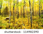 Vibrant colors of an alpine aspen forest in the Canadian Rockies - stock photo