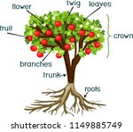 parts of plant. morphology of... | Shutterstock .eps vector #1149885749