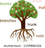 parts of plant. morphology of... | Shutterstock .eps vector #1149886106