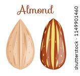 almond nut whole.almond kernel... | Shutterstock .eps vector #1149901460