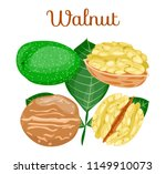 whole half peeled piece green... | Shutterstock .eps vector #1149910073