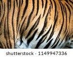 Close Up Of Big Feline Wildcat...