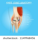human knee joint anatomy... | Shutterstock .eps vector #1149968456