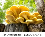 group of sunlit mushrooms  ... | Shutterstock . vector #1150047146
