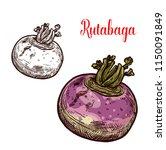 rutabaga vegetable isolated...   Shutterstock .eps vector #1150091849