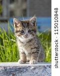 Stock photo little kitten on green background 115010848