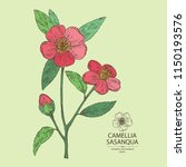 camellia sasanqua   camellia... | Shutterstock .eps vector #1150193576
