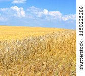 grain field in the rural... | Shutterstock . vector #1150225286