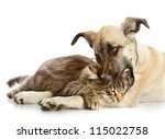 Stock photo the dog bites a cat isolated on a white background 115022758