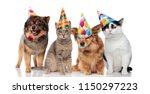 Stock photo group of four funny cats and dogs with birthday hats standing and sitting on white background 1150297223