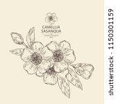 camellia sasanqua   leaves ... | Shutterstock .eps vector #1150301159