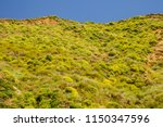 steep slope covered with clumps ... | Shutterstock . vector #1150347596