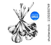 hand drawn bunch of garlic... | Shutterstock .eps vector #1150350749