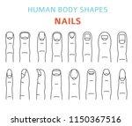 human body shapes. hand finger... | Shutterstock .eps vector #1150367516