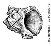 handdrawn sketch of a seashell... | Shutterstock . vector #1150450346
