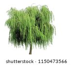 Weeping Willow Isolated On A...