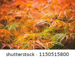 autumn season relax background... | Shutterstock . vector #1150515800