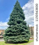 giant spruce tree at the square ... | Shutterstock . vector #1150563830