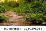 a dirt path in the summer field ... | Shutterstock . vector #1150596056
