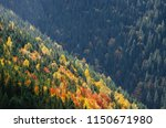 autumn forest on the slopes of...   Shutterstock . vector #1150671980