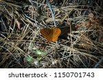 orange spotted fritillary... | Shutterstock . vector #1150701743