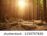 north scandinavian pine sunny... | Shutterstock . vector #1150707830