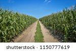 road through corn fields | Shutterstock . vector #1150777619
