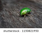 sternocera aequisignata...   Shutterstock . vector #1150821950