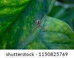 araneae organized as a living... | Shutterstock . vector #1150825769