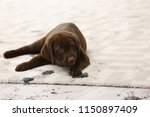 cute dog leaving muddy paw... | Shutterstock . vector #1150897409