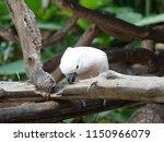 Adorable Cockatoo Bird Nibblin...