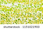 dotted background with circles | Shutterstock . vector #1151021903