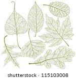 leaf skeletons vector set.   Shutterstock .eps vector #115103008