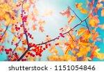 beautiful bright autumn nature... | Shutterstock . vector #1151054846