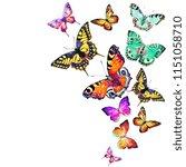 beautiful butterflies swirl...   Shutterstock . vector #1151058710