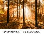 autumn forest landscape | Shutterstock . vector #1151079203