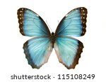 Stock photo close up macro shot of a blue butterfly isolated on a white background 115108249