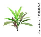 Green Tropical Plant. Cordylin...