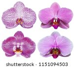 orchids isolated on white... | Shutterstock . vector #1151094503