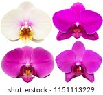orchids isolated on white... | Shutterstock . vector #1151113229