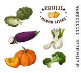 vector vegetable element of... | Shutterstock .eps vector #1151123846