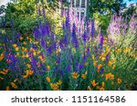 city of victoria british... | Shutterstock . vector #1151164586