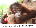 ape baby holding his toys | Shutterstock . vector #1151182970