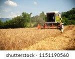 combine harvesting grain  on a... | Shutterstock . vector #1151190560
