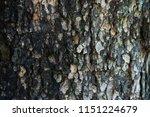 tree bark texture  old bark... | Shutterstock . vector #1151224679