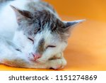 cat with a light brown color... | Shutterstock . vector #1151274869