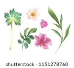 floral set. colorful floral... | Shutterstock . vector #1151278760
