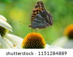 Colorful Butterfly On Top Of...