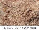corn bran for feeding fish.... | Shutterstock . vector #1151313320